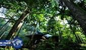 الجابون توقع اتفاقًا مع مانحين لحماية الغابات بحوض الكونجو
