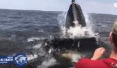 بالفيديو.. حوت ضخم كاد يلتهم قاربا خلال مطاردة لسمكة صغيرة