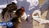 إعدام 260 ألف طائر في جنوب إفريقيا لاحتواء إنفلونزا الطيور