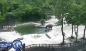بالفيديو.. فيلان ينقذان صغيرهما من الغرق