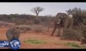 بالفيديو.. فيل يهاجم مجموعة من وحيدي القرن للحفاظ على طعامه