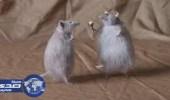 بالفيديو.. مستشارة كويتية: هرمون مشترك بين الرجال والفئران يتسبب في تعدد العلاقات