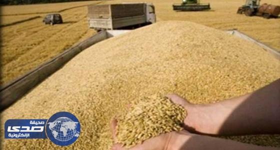مصادر  :المخزون القطري من الحبوب يكفي 4 أسابيع فقط