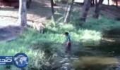 بالفيديو.. سكران يُحاول مصافحة الأسود