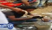 بالفيديو.. مشاهد مرعبة لباعة الثعابين في سوق صبيا