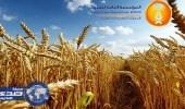 """"""" العامة للحبوب """" تكشف تفاصيل تعاقدها على القمح المستورد"""
