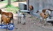 الكلاب الضالة تتسبب فى مقتل شاب مصري