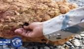 بالصور.. حرس الحدود يبطلون مفعول «ألغام بيئية» زرعها حوثيون