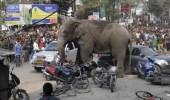 بالفيديو.. فيل يحطم سيارة في مهرجان بالهند