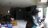 بالفيديو.. دب يقتحم منزلاً ويعزف على البيانو