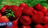 حظر استيراد الفراولة الطازجة من مصر