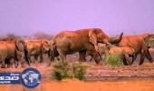 مالي تستعين بكلاب من هولندا لإنقاذ الأفيال