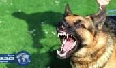 مناطق عازلة حول القرى المصابة بداء الكلب في ماليزيا