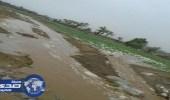 بالفيديو والصور.. هطول أمطار على أضم وقلوة