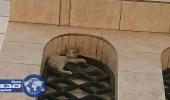 """بالصور.. الدفاع المدني بالطائف ينقذ """" قطة """" عالقة"""