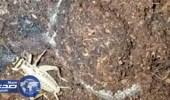 بالفيديو.. عنكبوت يتربص بحشرة ويخطفها بذراعيه