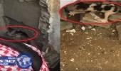 بالفيديو.. مواطن يكسر جداراً بمنزله لإنقاذ قطة محتجزة