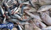 بلدية الدلم تتفاعل مع مواطن وثق عمال يصطادون الأسماك من الصرف الصحي