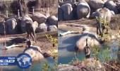 """بالفيديو..إوزة تهزم فيل ضخم بـ """" الضربة القاضية """""""