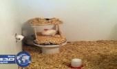 بالصور.. 13 طريقة لصنع مقلب في غرفة صديق