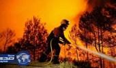 حرائق تتلف مئات الهكتارات من الأشجار الغابية بالجزائر