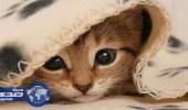 قطة تتسبب في خسائر تقارب 40 ألف دولار لمٌربيها