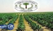 مدير زراعة تبوك يشيد بنتائج التجربة الأولى لمهرجان تيماء الزراعي