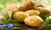 شركة هولندية تطور سلالة جديدة من البطاطس مقاومة للآفات