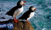 """تقلص أعداد الطيور البحرية في جزر """" جالاباجوس """" لارتفاع الحرارة"""