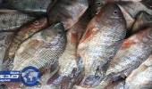 """حظر استيراد أسماك """" البلطي """" و """" البوري """" من مصر"""