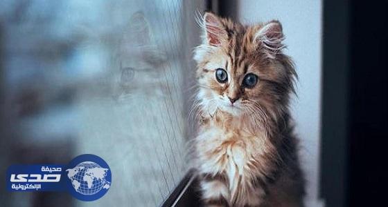 دلالات رؤية القطط في المنام