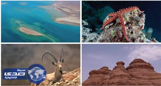 مقومات مشروع البحر الأحمر تمنحه الصدارة عالميا