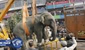 السلطات الهندية تقتل فيلًا أودى بحياة 15 شخصًا