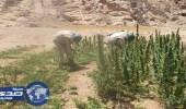 الجيش المصري يضبط 3 إرهابيين ويدمر 4 مزارع مخدرات بسيناء