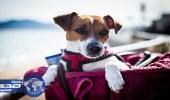 رجل يٌطالب بأجازة عام كامل للبحث عن كلبه الضائع