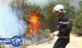 تونس: توقف 3 أشخاص مشتبه بهم في إشعال الحرائق