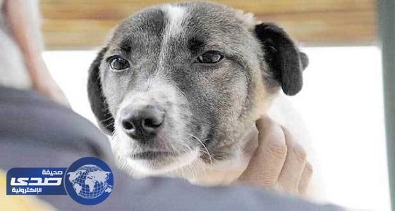 السجن 6 أشهر لشخص عذب كلبا بالعصا والركل