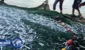 الزراعة تطور 16 مرفأ لصيد الأسماك