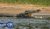 السلطات المصرية تنقذ 30 تمساحا قبل بيعها