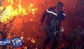 حرائق الغابات تتلف ألفي هكتار من الأشجار في تونس