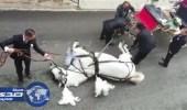 بالفيديو.. سقوط حصان يحمل عروسين لحفل زفافهما