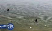 إنقاذ طفلتين من الغرق في تبوك