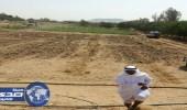 الصور.. ازالة مزارع تسقى بمياه الصرف الصحي بمكة