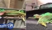 بالفيديو| إخراج رطبا صالحا من القمامة.. ومواطن: مستعد أكله