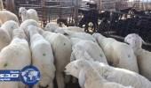 وصول مليوني رأس ماشية عبر ميناء جدة