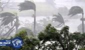 بالفيديو.. طائر عملاق يظهر في إعصار إرما