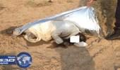 العثور على جثة متحللة في الصحراء بعفيف