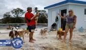 زوجان يتحديان إعصار ماريا