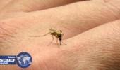 """الصحة : البعوض الظاهر مؤخراً ليس ناقلاً لمرض """" الكوليرا """""""