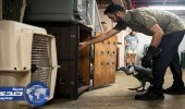 بالصور.. استعدادات مكثفة داخل حديقة حيوان ميامي لمواجهة إعصار إرما